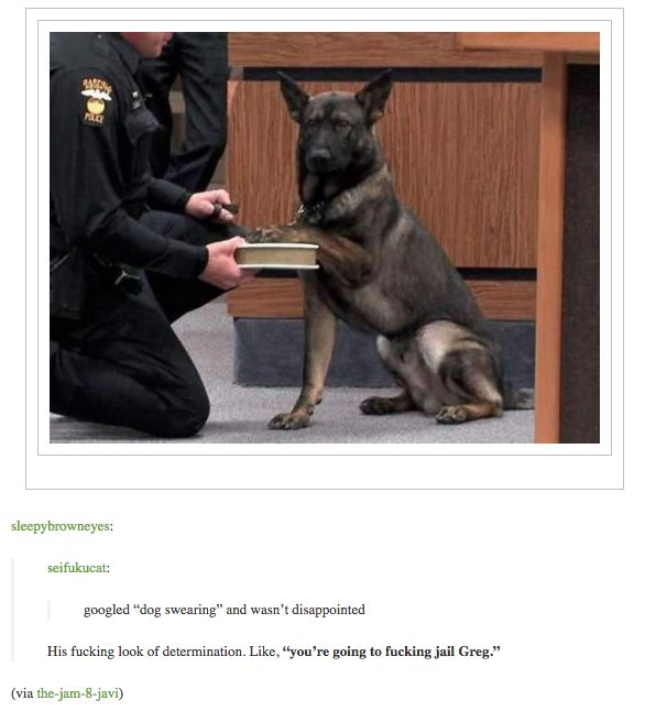 You re going to jail Greg Police Humor Police Dogs Military Dogs