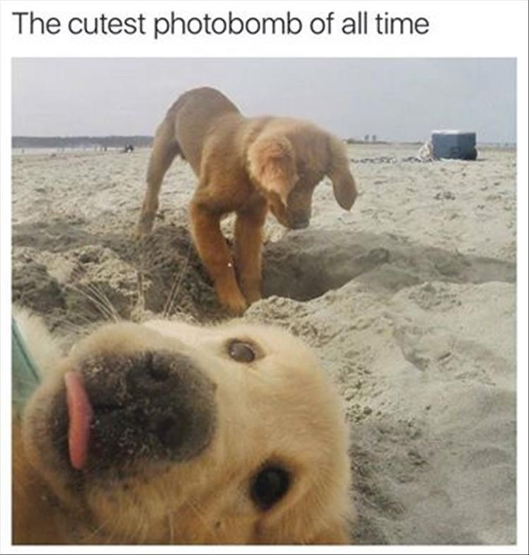 Funny Animal The Day – 21 Pics