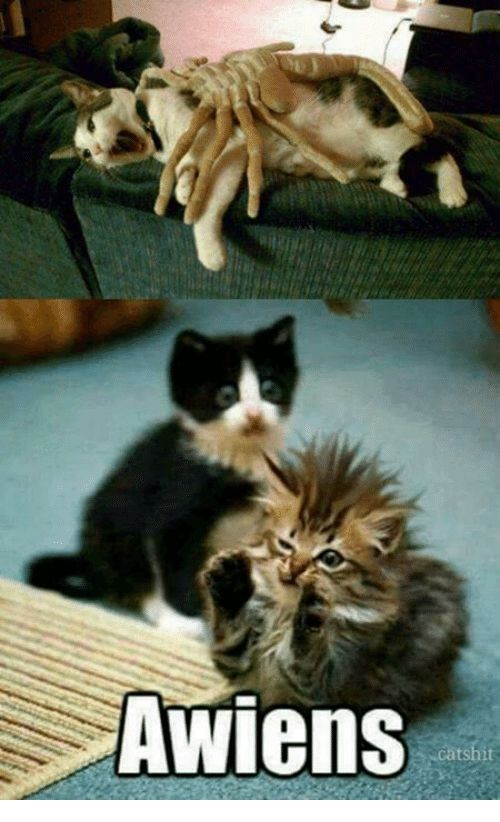 Image result for awiens Funny Looking Cats Funny Animal Memes Funny Animal