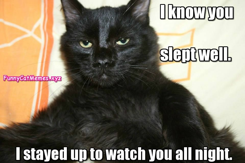 I Know You Slept Well Funny Kitten MEME