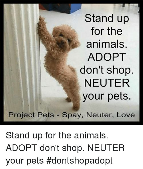 Animals Love and Memes Stand up for the animals ADOPT don t