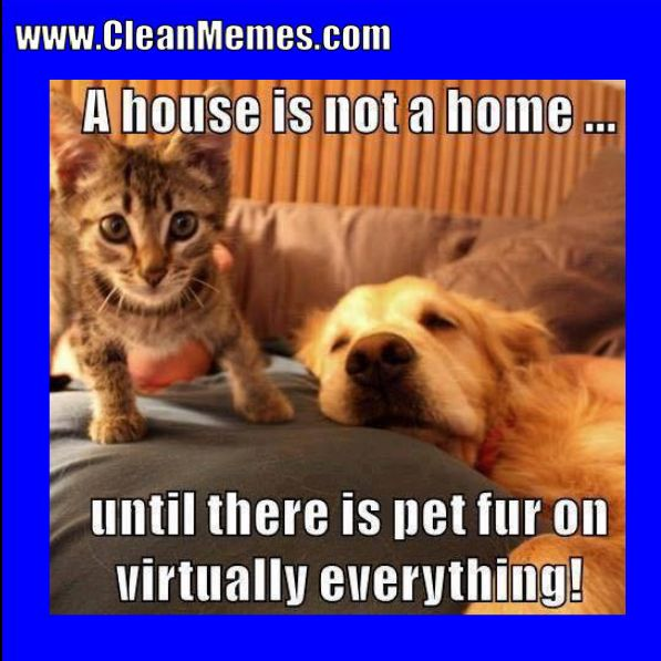Author cleanmemesPosted on January 24 2018 Categories Cat Memes Clean Funny Clean Memes Dog MemesTags Cat Memes Clean Funny Clean Memes