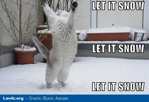 let it snow winter cat meme