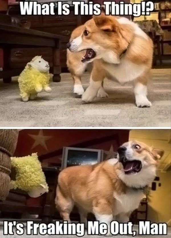 Newest Funny Dogs Funny Cats Funny Animals Funny Captions s Hilarantes