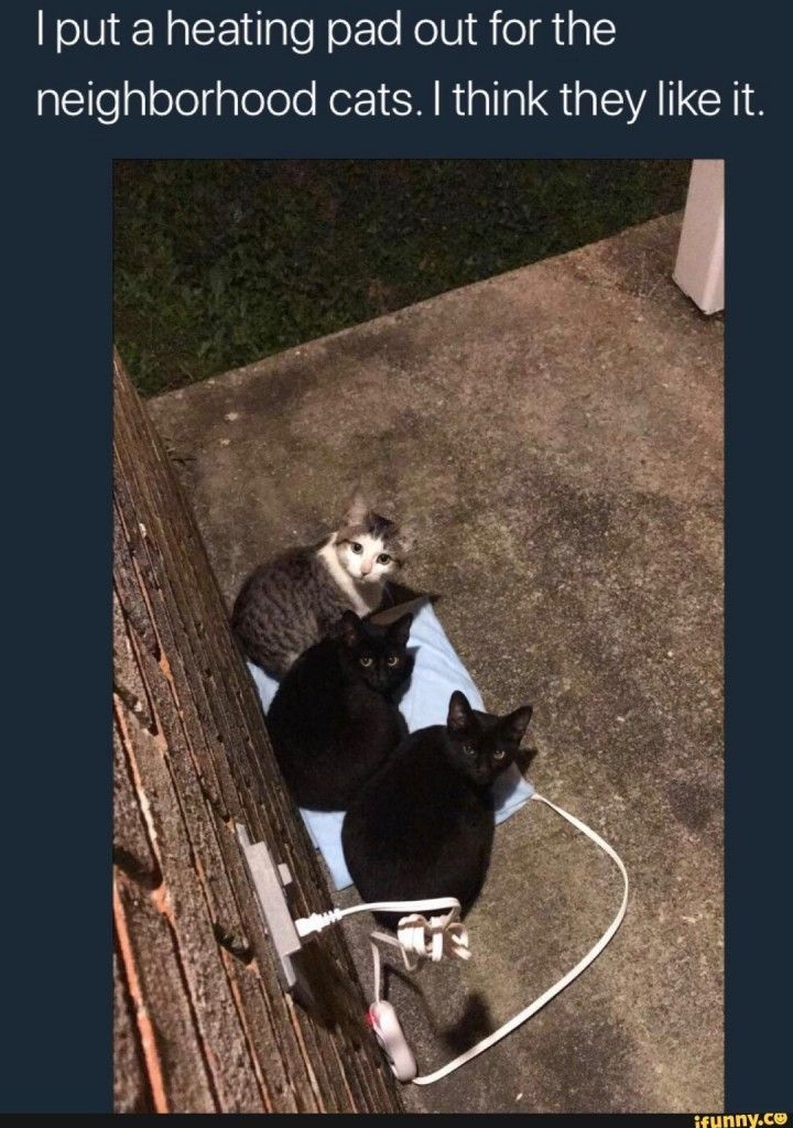 The cats were cold Baby Animals Funny Cute Cats Cute Funny Animals Cool