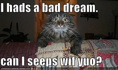 I Hads A Bad Dream Can I Seeps Wif Yuo Funny Scared Cat Meme
