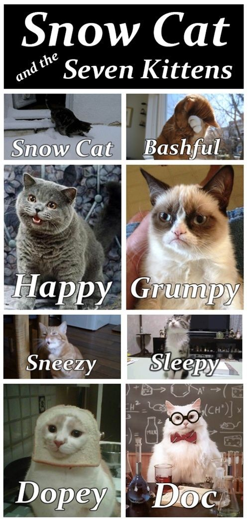 Funniest cat memes ever