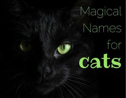 Magical Cats