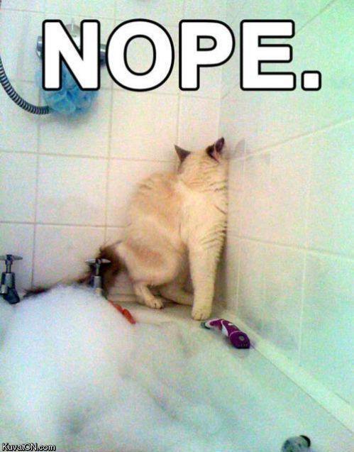 Cats Water = NO
