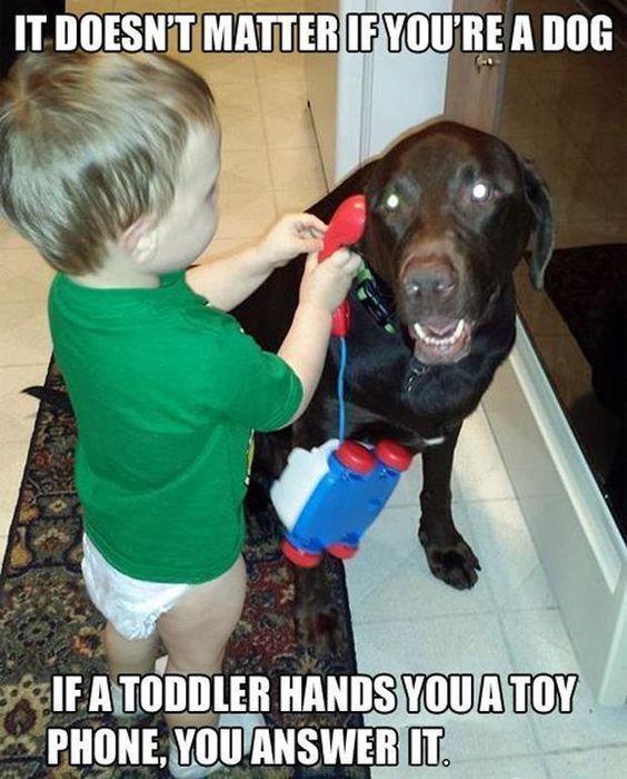 A funny dog❤ Animals & Kids Pinterest