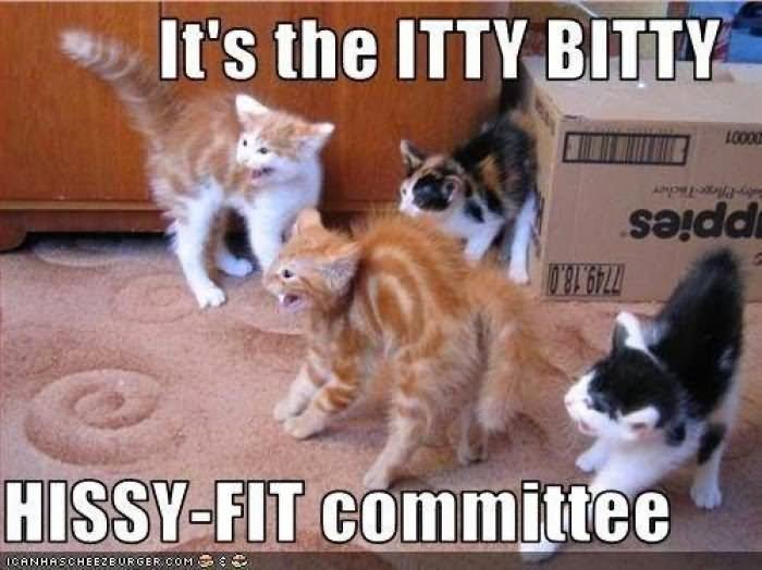 It s The Itty Bitty Funny Cat Meme Picture
