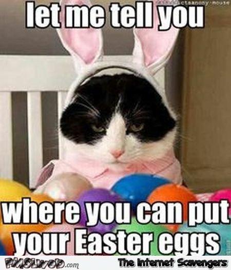 Funny Easter cat meme