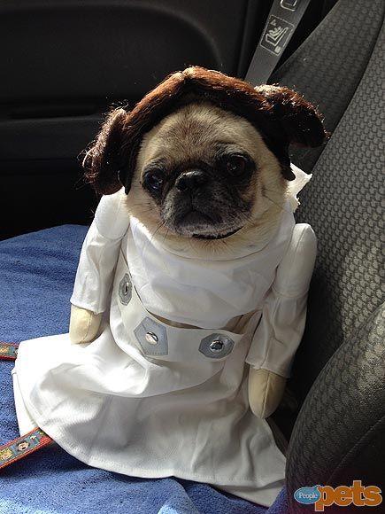 Princess Leia Pug Halloween Pets in Costume People