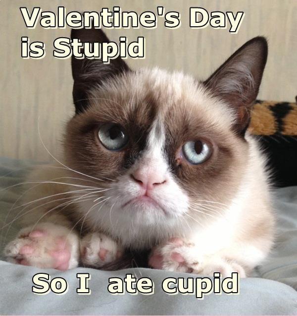 grumpy cat valentines day pics Valentines Day