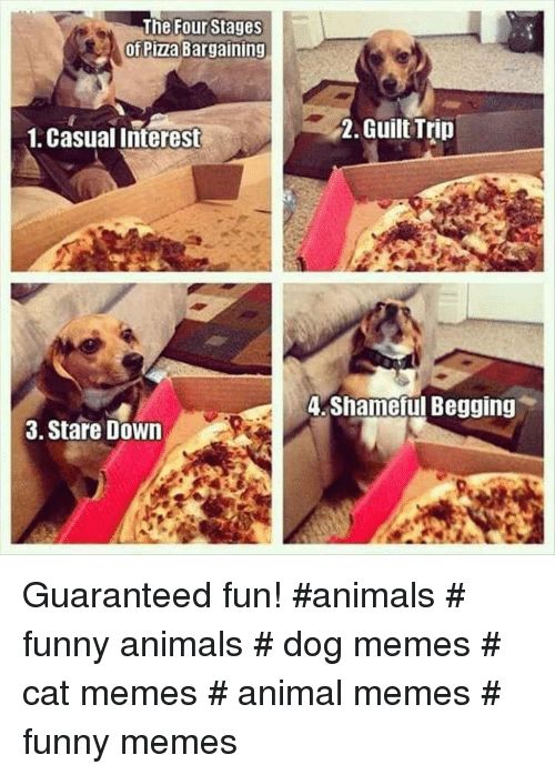 Animals Funny and Funny Animals The Four Stages of Pizza Bargaining 1