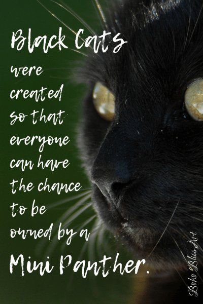 Black cats were created so that everyone can have the chance to be owned by a