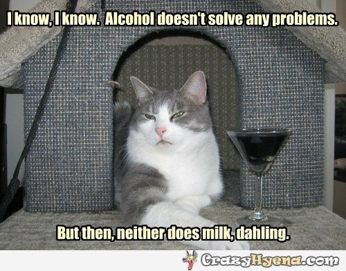 cat drinking alcohol instead of milk pic