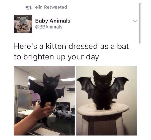 Omg I Love Cats Crazy Cats Cute Cats Cat Fun Meme Meme