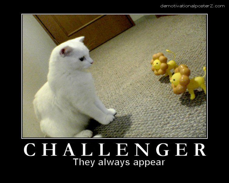 They Always Appear Funny Cat Challenger Poster