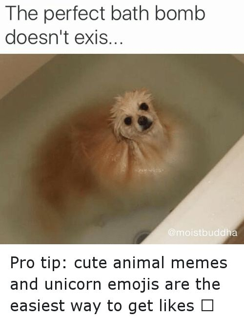 Animals Anime and Cute The perfect bath doesn t exis