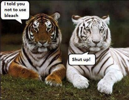 Bleach funny quotes animals quote funny quote funny quotes humor tigers