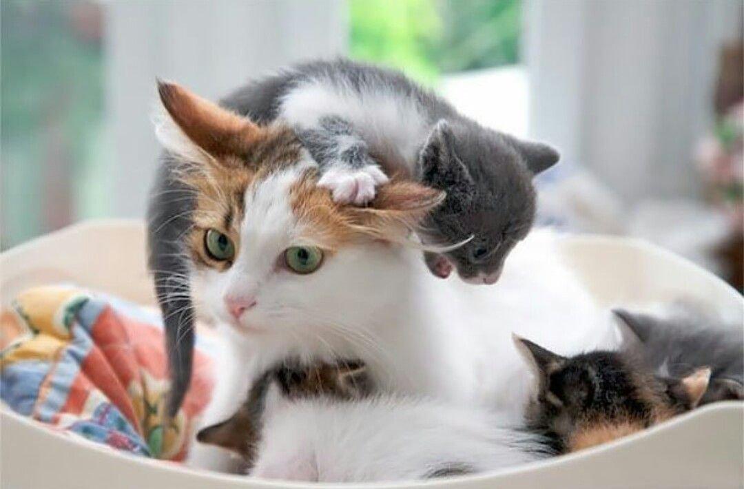 Cat · Funny Cat MemesFunny