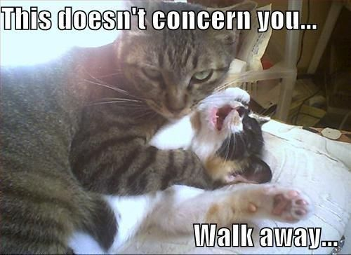 Funny Cat Phrases Awesome Funny Cat with Captions with Guns with Quotes without