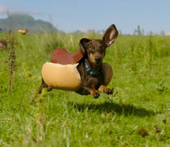 Heinz Made a Hilarious Super Bowl Ad That s Basically a Horde of Weiner Dogs in Costumes