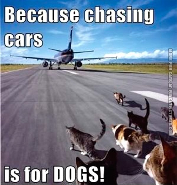 Funny meme of cats running down a runway chasing Donald Trump s airplane