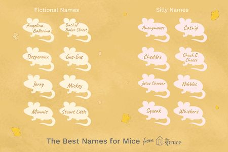 name ideas for mice