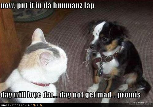 Cats and dogs funny pet pictures