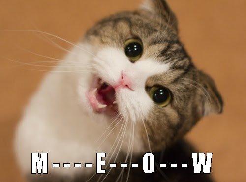 cats meow cat meow m e o w cute cat meow