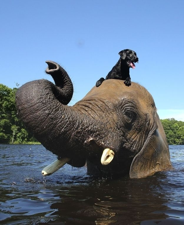 "A dog and an elephant set out to prove that ""species"" is just a classification not a re mendation about who to make friends with"