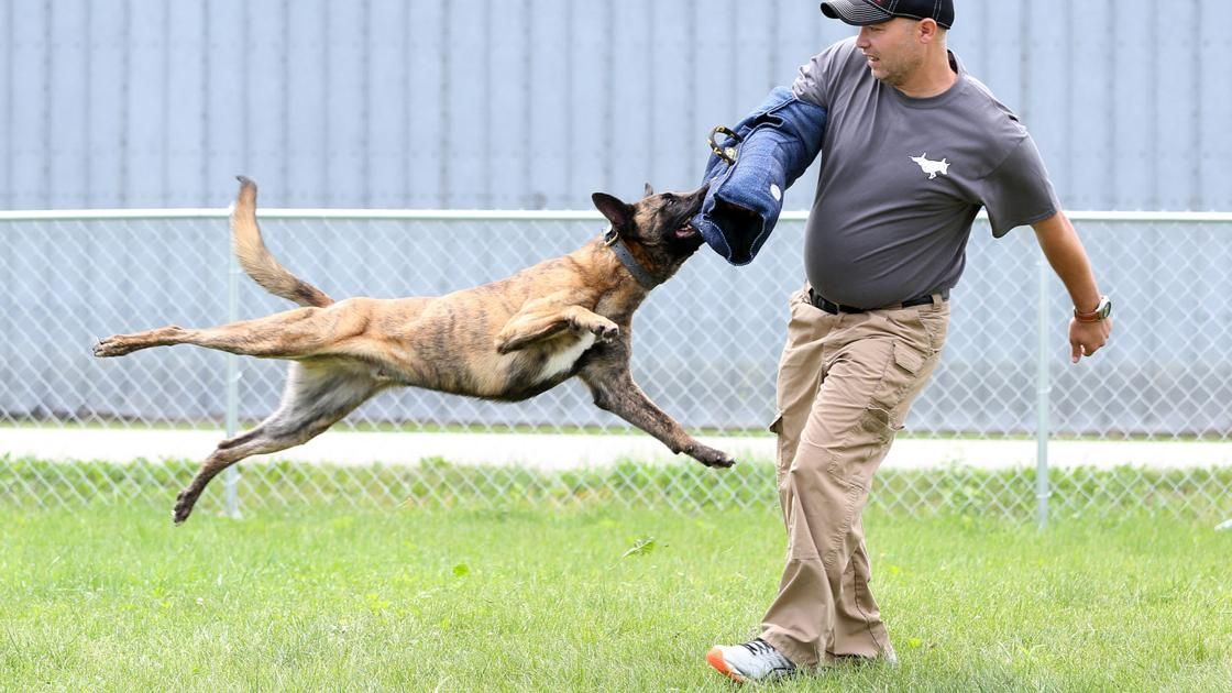New facility for training K 9s for law enforcement work opens soon in New Hartford Local News