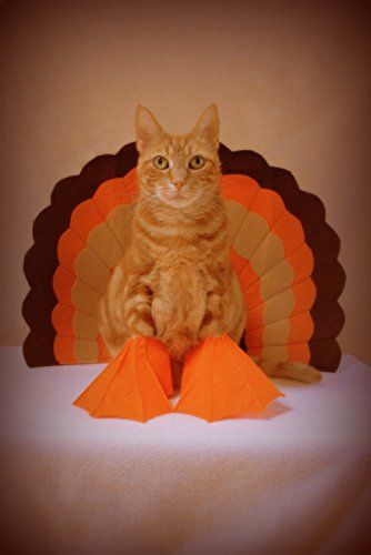 Funny Cat Thanksgiving Greeting Card Invitation