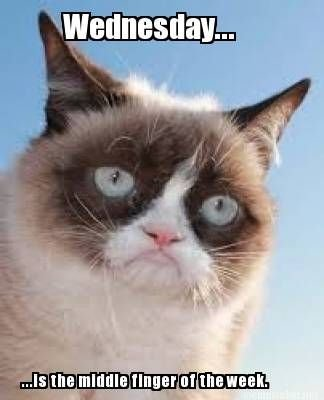 "Grumpy Cat ""does"" Wednesday"