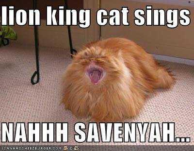 Lion King Kitteh