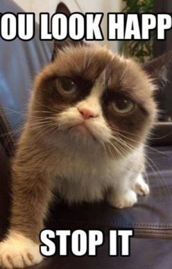 Grumpy Cat Memes Christmas Clean