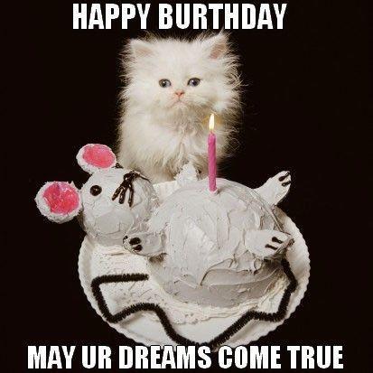 birthday cat Google Search Funny Happy