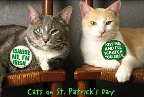 Find the New Funny St Patricks Day Cat Pictures