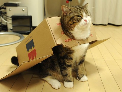 funny cat Halloween costume plane