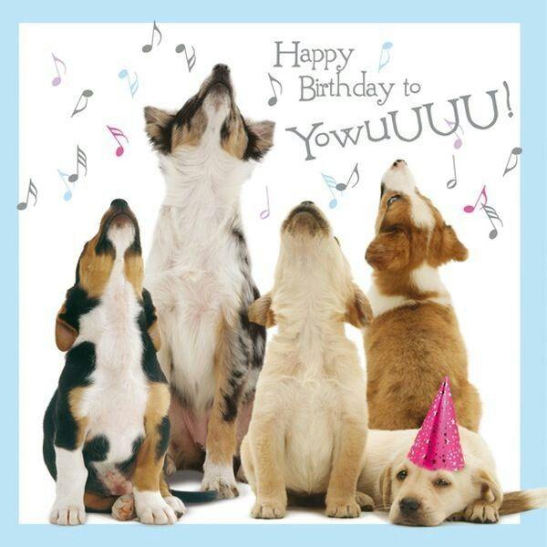 Honden Happy Birthday Greetings Happy Birthday Dog Meme Happy Birthday Sister Birthday Memes