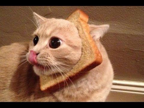 Funny Bread Cat Videos pilation