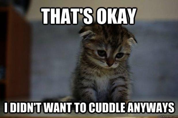 Cute Kittens Desktop Background Cute Cats Baby Pics