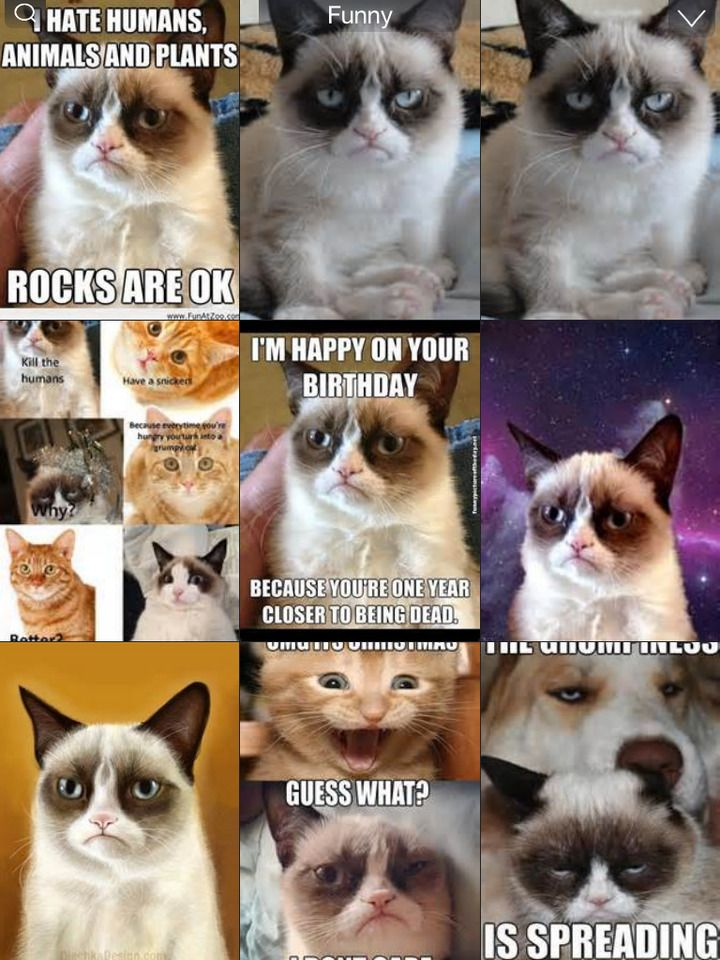 Grumpy Cat Meme Latest Fun ny Fat and Happy Cats mbs image