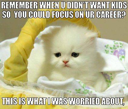 career cat funny cat cat meme waiting to have kids
