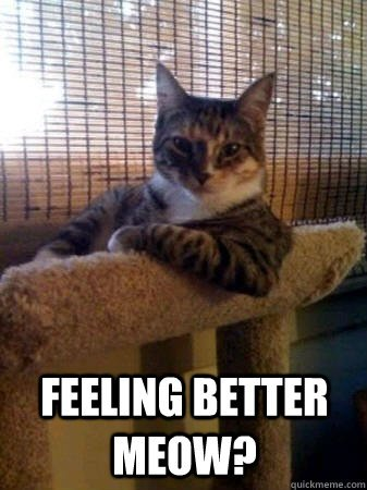 feeling better meow feeling better meow The Most Interesting Cat in the World