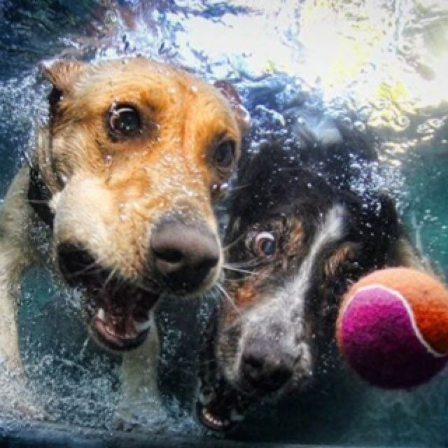 The book contains over 80 unique and exhilarating photographs of dogs underwater in pursuit of a ball