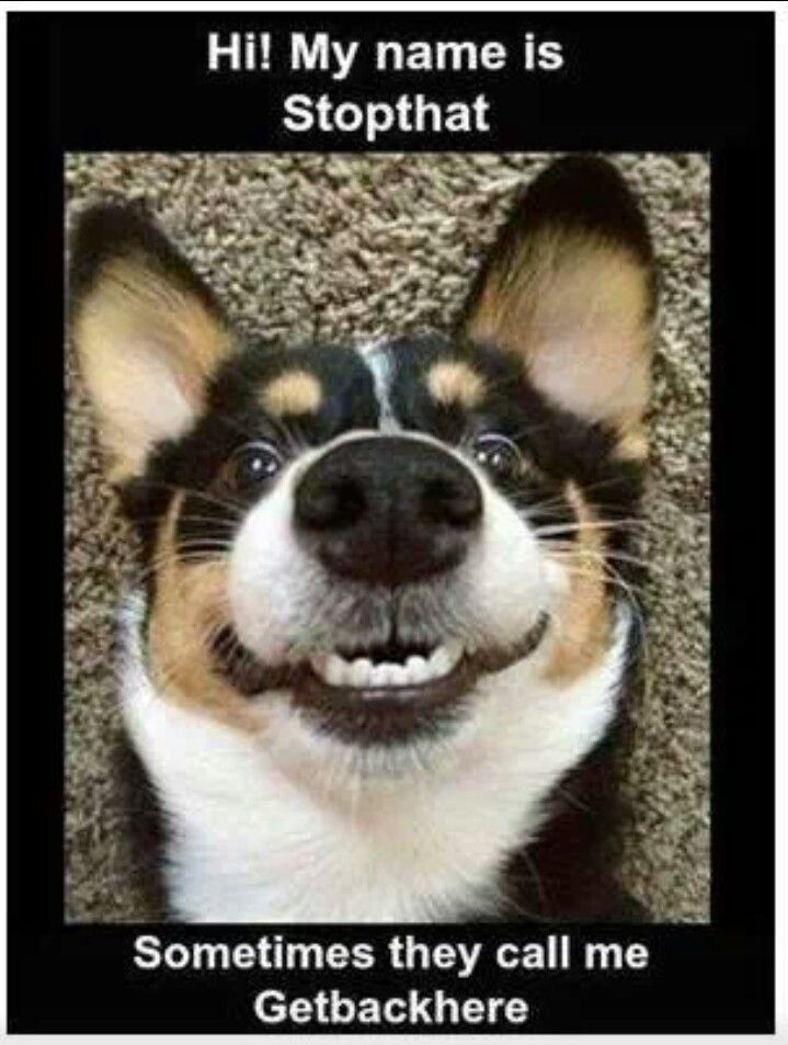 Grab the Fascinating Funny Happy Dog Quotes with Pictures