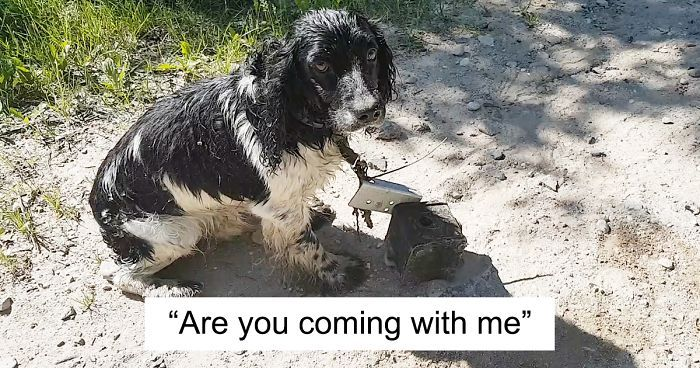 Woman Finds A Wet Dog With Something Weird Tied Around His Neck Starts Crying When She Realizes What It Is